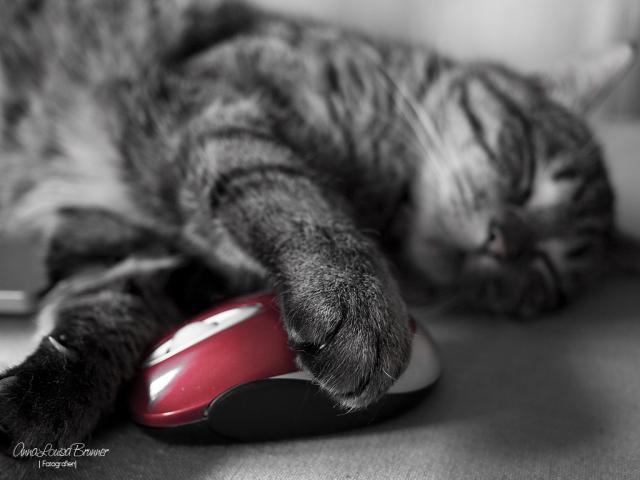 Maus bleibt Maus