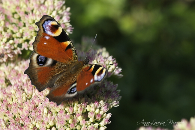 Flieg Schmetterling, flieg!