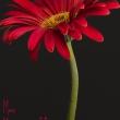 Muttertagsbluemchen