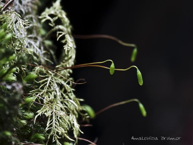 Microantennen im Moos