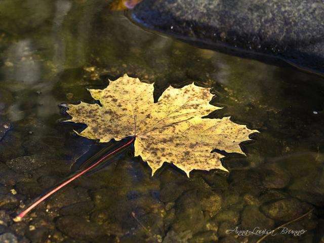 das Herbstblatt