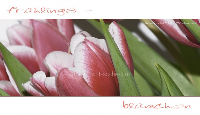 Fruehlingsbluemchen